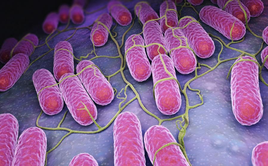 Pałeczki salmonelli w wizualizacji 3D