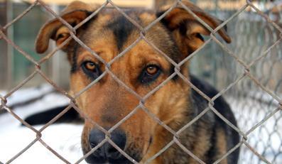 Zwierzęta uratowane od głodu i zimna