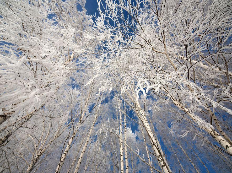 Drzewa skute mrozem - zdjęcie ilustracyjne