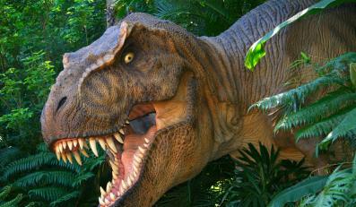Polscy paleontolodzy przyłapali dinozaura na jego własnych śladach
