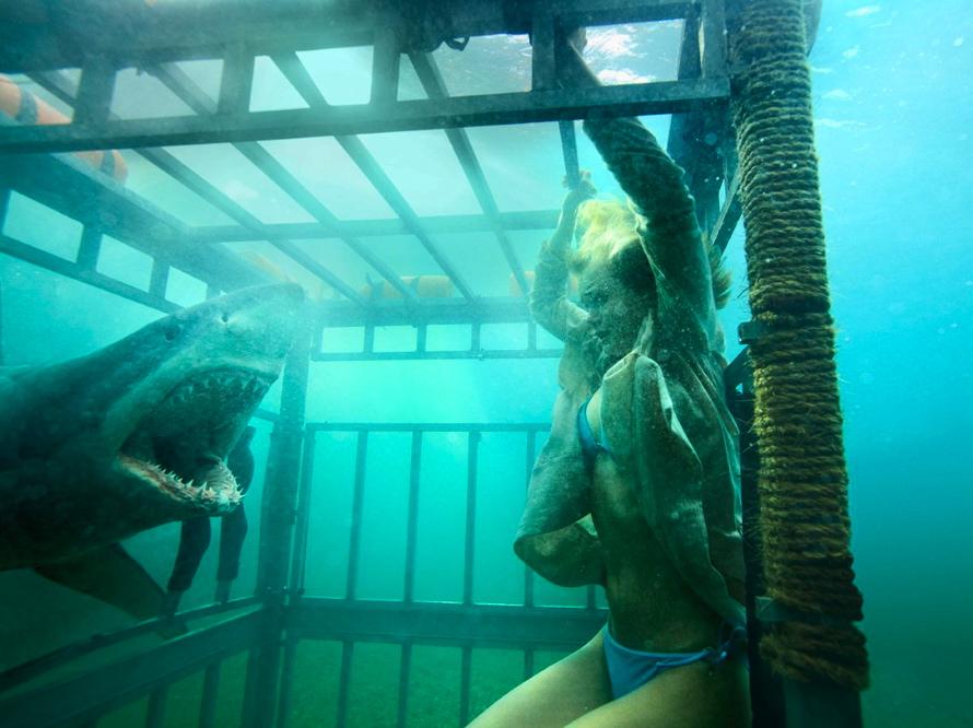 Sześć odmian rekinów zaatakuje w polskich kinach