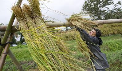 Tajfun Roke szaleje nad Japonią