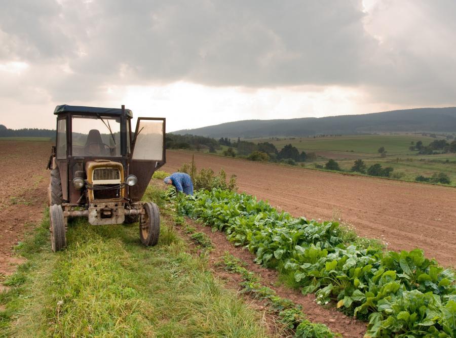 Rolnik w polu