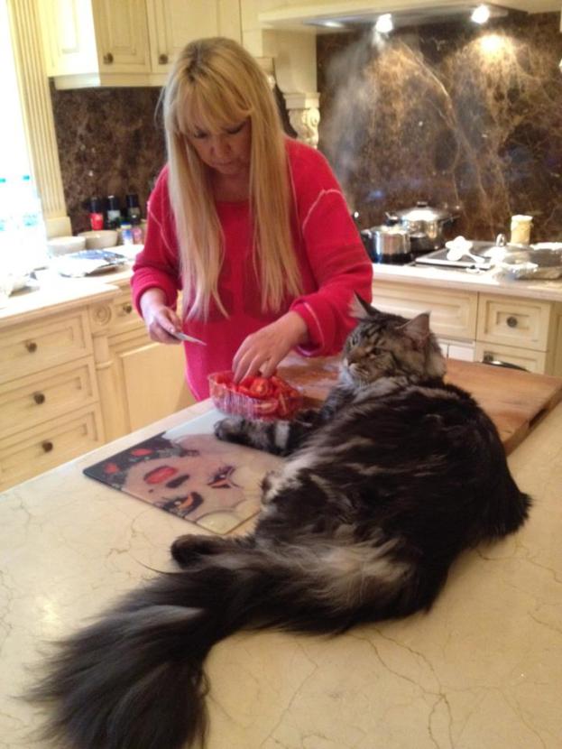 Maryla Rodowicz z kotem