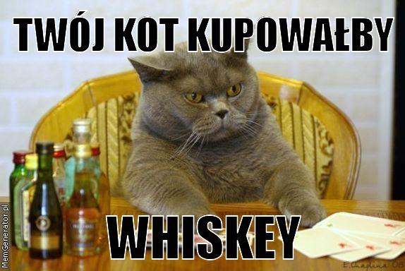 Koty Znaleziska I Wpisy O Koty W Wykoppl Od Wpisu 16527049