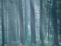 Najpiękniejsze krajobrazy Polski. Chcesz tam pojechać?