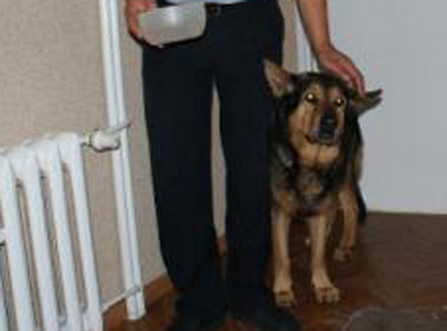 Zaginiony pies sam zgłosił się na policję