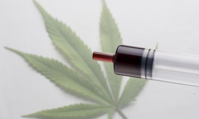 Wiele hałasu o olej z konopi. Jakie ma właściwości medyczna marihuana?
