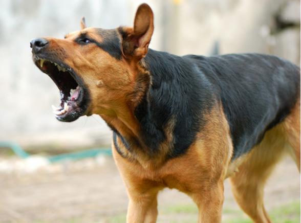 Ze schroniska trafiają na psi ring
