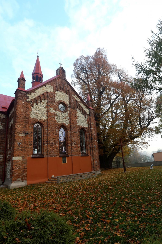 Kilkusetletnia lipa rosnąca w przy kościele pw. Przemienienia Pańskiego w Cielętnikach