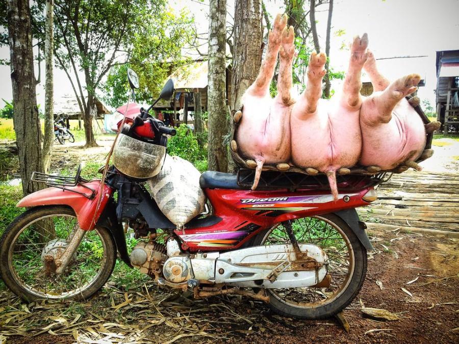 Azjatycki skuter przewiezie wszystko; fot. T. Bogusz / Pirania na kolację