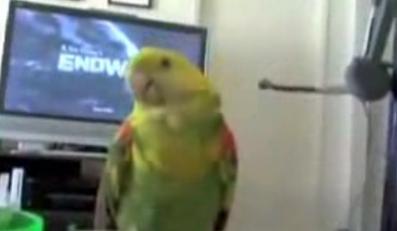 Tak papuga gra na konsoli