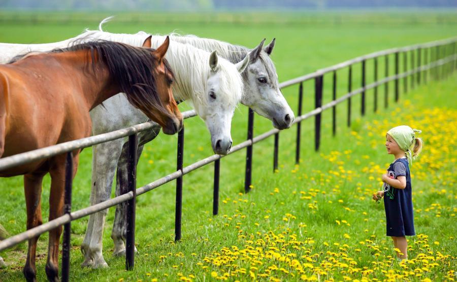 Dziewczynka i konie. Polska wieś